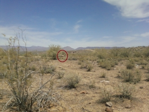 Our fishing companion, a wild burro (circled).
